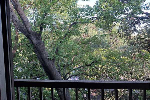 Photo #13 Treed view off of balcony and living areas.